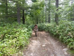 薮の中の林道