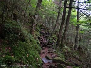 鬱蒼とした樹林帯