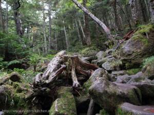 鬱途中からは大岩をよじ上る