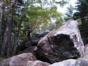 天狗岳北側のコースはゴツゴツしている