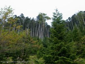 テントサイトの後ろの森